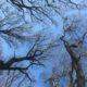 Bäume wachsen in den Himmel