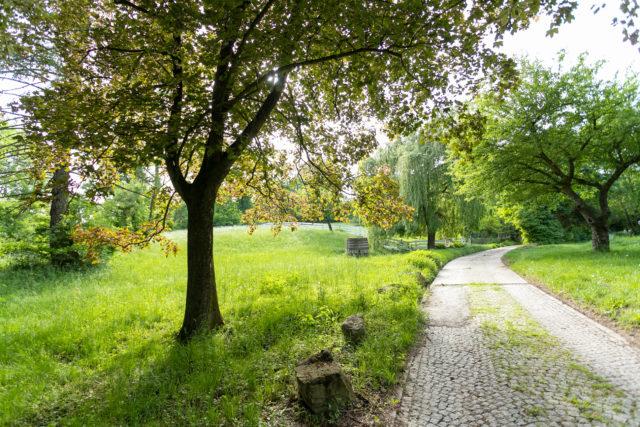 Weg in Sommerlandschaft